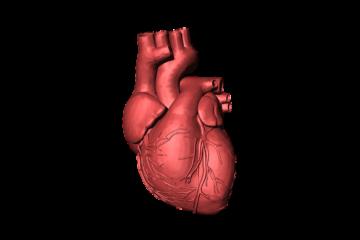 11 zaujímavých faktov o ľudskom srdci