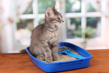 Hľadáte papanie pre vyberavé mačičky?