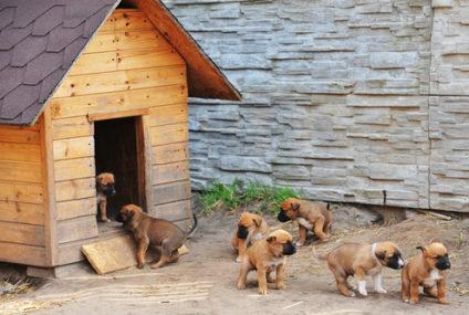 Základné pravidlá pri starostlivosti o psov